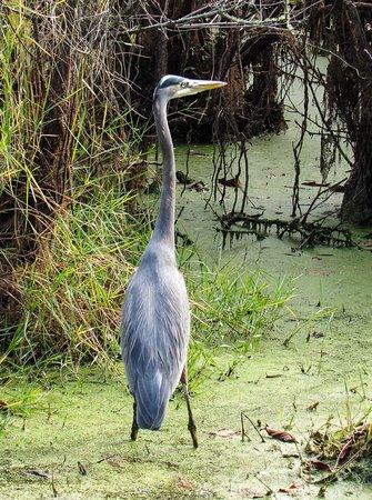 St. Andrews State Park: FB_IMG_1480166220185_large.jpg