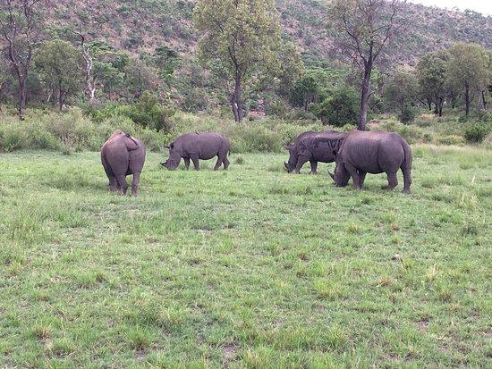 Welgevonden Game Reserve, Νότια Αφρική: photo0.jpg
