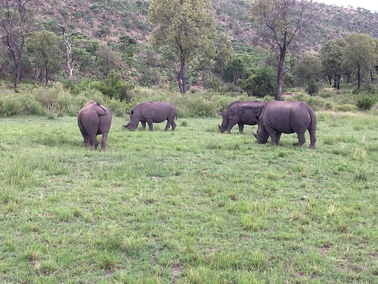 Welgevonden Game Reserve, Republika Południowej Afryki: photo0.jpg