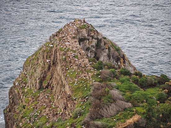 Balclutha, New Zealand: Nugget Point rock outcrop using zoom lens