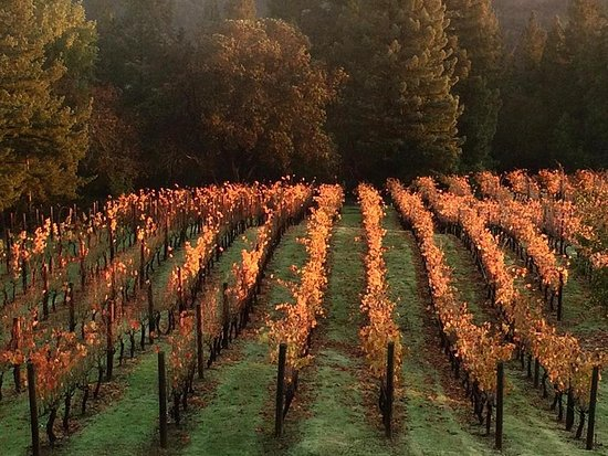 Napa Valley, Kalifornien: Autumn and a winter's rest is on the way