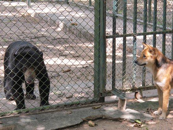 Tha Yang, Ταϊλάνδη: Cerquita pero no mucho para que puedan convivir juntos