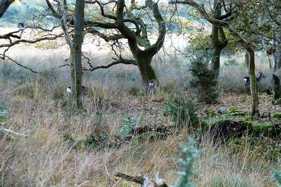 Although the RSPB Arne is about birds there are deer there - three in this photo - can you see t