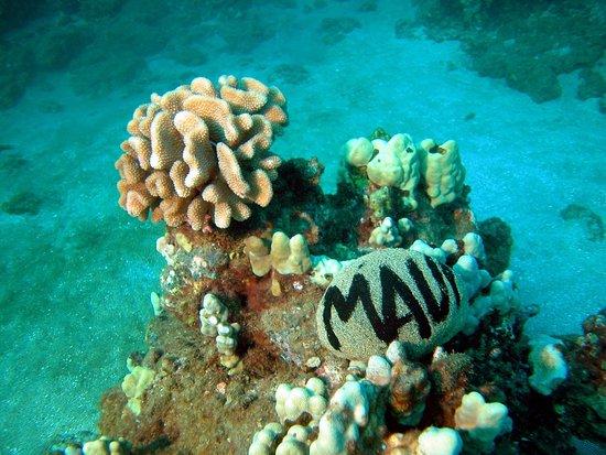 Ed Robinson's Diving Adventures: photo0.jpg