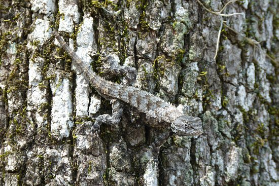 Suwannee Valley Campground: Some local wildlife