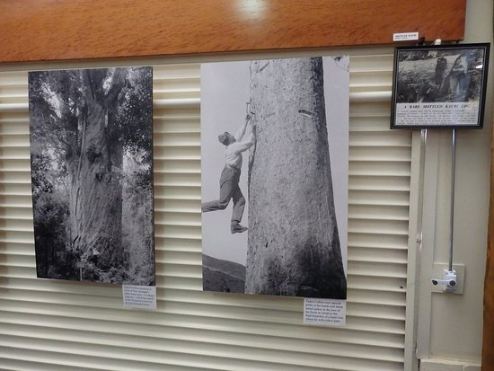 Matakohe, New Zealand: Extensive historic and descriptive photo collection on the Kauri industry and the local people