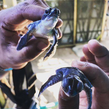 ‪Sea Turtle Hatchery Centre Mahamodara‬
