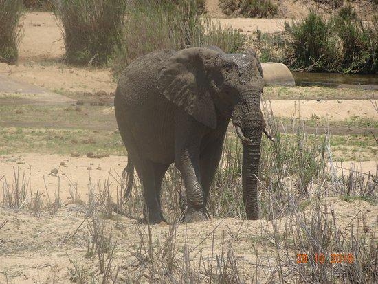 อุทยานแห่งชาติครูเกอร์, แอฟริกาใต้: Foto spreekt voor zich!