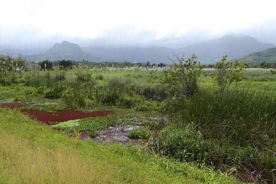 Kawai Nui Marsh: View of diverse nature and mountains