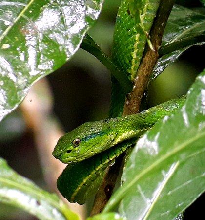 Santa Elena, Costa Rica: Monteverde Nature Guided Tours
