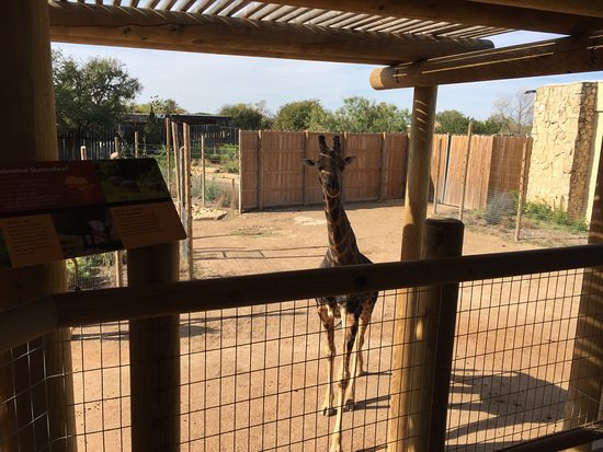 アビリーン動物園
