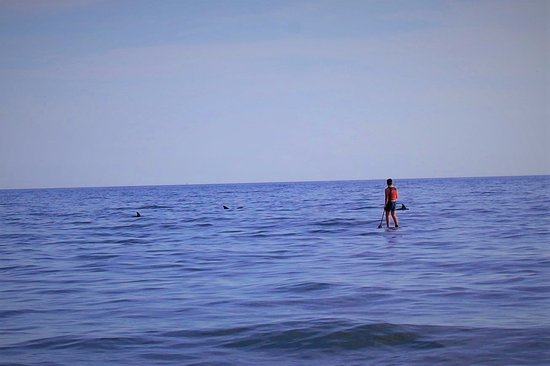 Surf City, Carolina del Norte: Paddle boarding with the dolphins