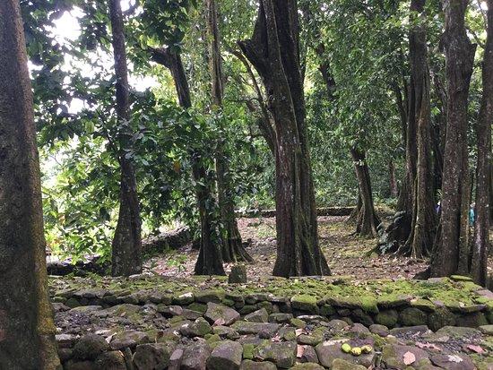 Moorea, Franska Polynesien: Le marae d'Opunohu