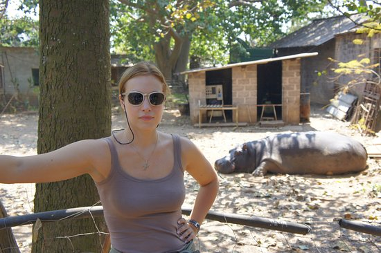 Chimfunshi Wildlife Orphanage: бегемот