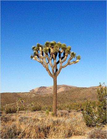Twentynine Palms, كاليفورنيا: Joshua Tree National Park