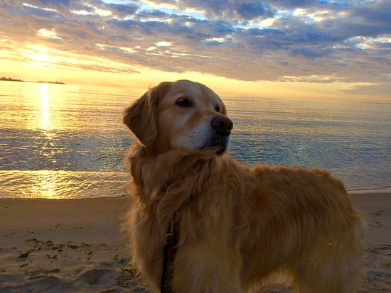 Baileys Harbor, WI: Pet friendly beach!
