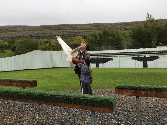 Ballyvaughan, Irland: 6 year old nephew with snowy owl