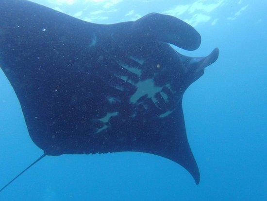North Stradbroke Island, Australië: received_1306558949414333_large.jpg