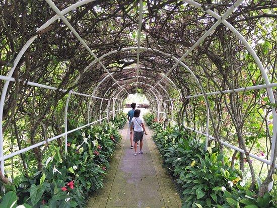 Holualoa, Hawái: Mauka Meadows
