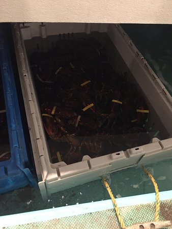 Dock's Seafood: photo4.jpg