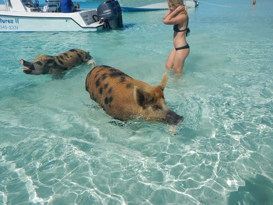 Staniel Cay: photo8.jpg