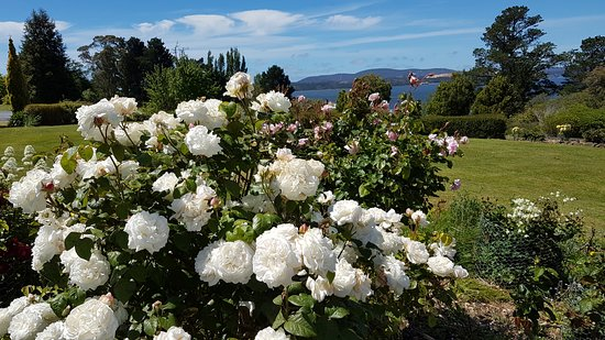 Beauty Point, Australia: Roses