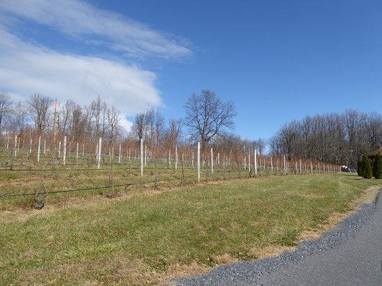 Linden, VA: Vines