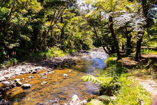 Coromandel, Nieuw-Zeeland: photo6.jpg