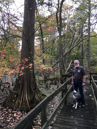 Mount Vernon, IN: Board walk through the cypress swamp