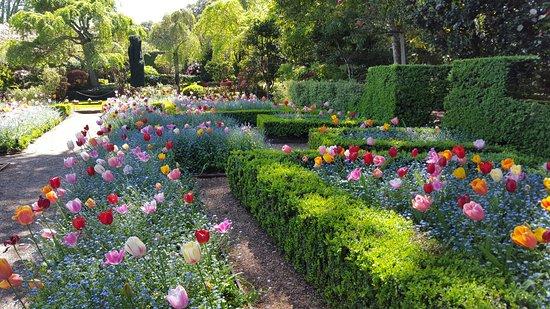 Colorful Tulip Gardens - Picture of Filoli, Woodside - TripAdvisor
