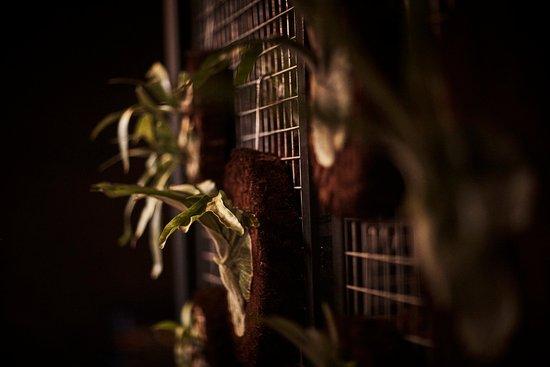 Brunswick, Australia: Staghorns