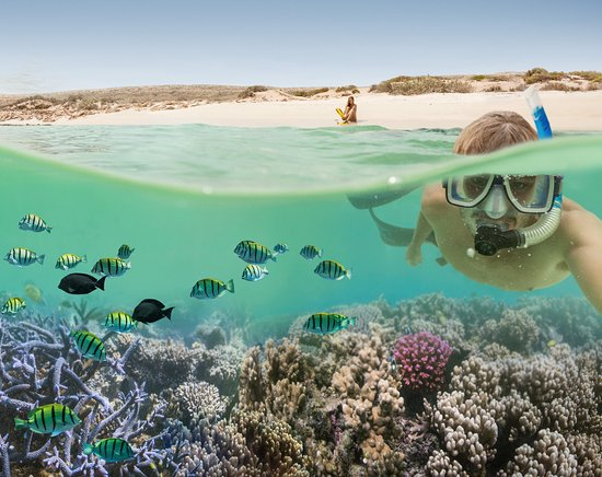 Image result for ningaloo reef
