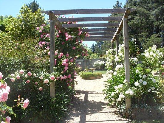 Sutton, Australia: Roses 2