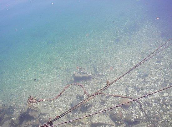 Kihoku-cho, Japón: 水の透明度が高いです。魚やウニがたくさんいます。
