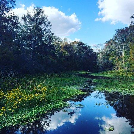 Lake Panasoffkee, FL: photo1.jpg