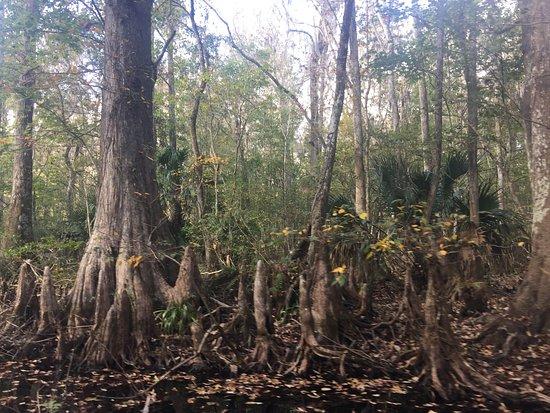 Lake Panasoffkee, FL: photo3.jpg
