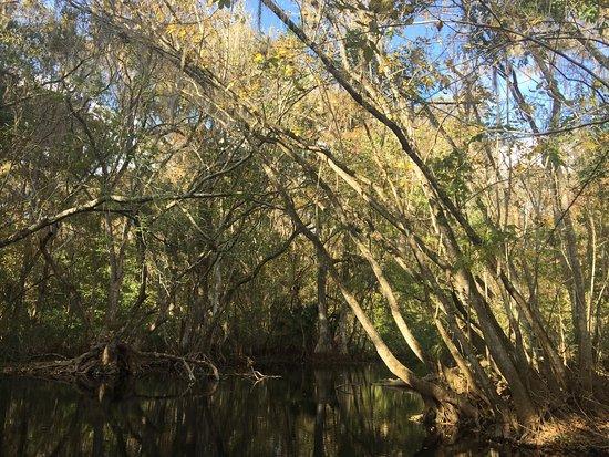 Lake Panasoffkee, FL: photo4.jpg