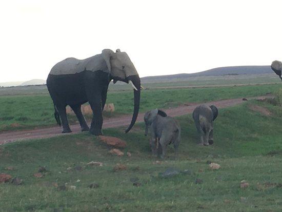 Amboseli National Park, Kenia: The majestic elephant