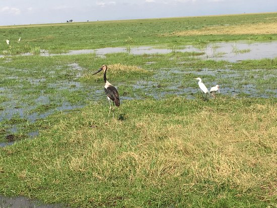 Amboseli National Park, Kenia: Swampy springs and birds