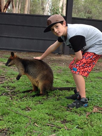 Dubbo, Australia: can hand feed and pat the wallabies