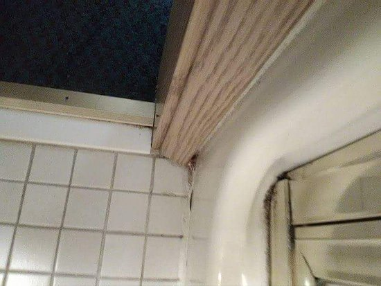 Gresham, Όρεγκον: Mold on shower door