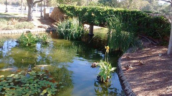 Barona Resort & Casino: the bridge that crosses from Valet Parking area to ponds & Chapel.