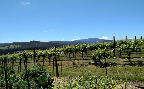 Dixons Creek, Australia: De Bortoli Winery