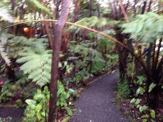 Volcano Inn: photo1.jpg