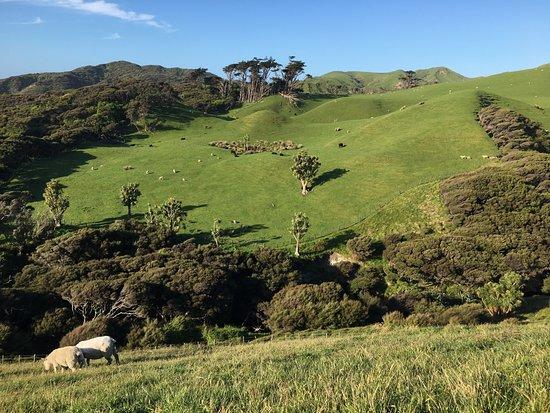 Golden Bay, New Zealand: Camino