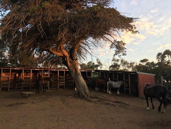 Warrnambool, Αυστραλία: Rundell's Mahogany Trail Rides