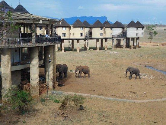 Pinewood Beach Resort & Spa: výhľad z izby na Safari