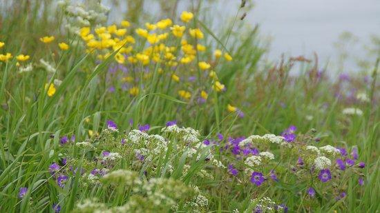Reine, Norwegia: Blumen