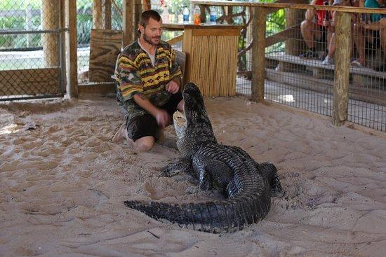 Alligator show Picture of Gator Park Miami TripAdvisor