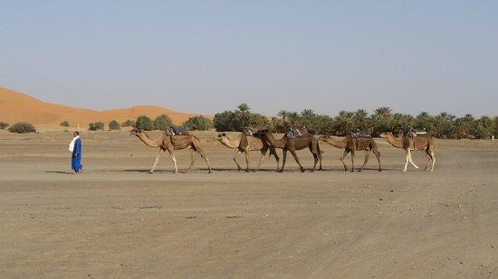 Riad Mamouche: panorama